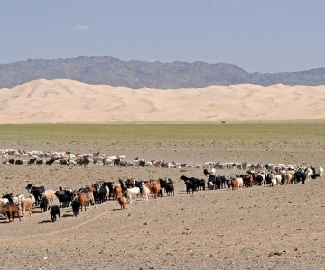 Mongolia Promo Tours and Packages